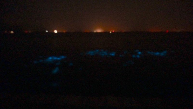 Bioluminscence in the Indian River Lagoon