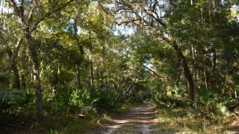 Fairchild Oak Trail