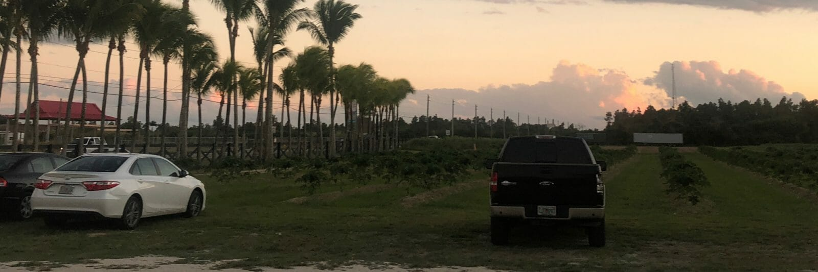 Florida City farms