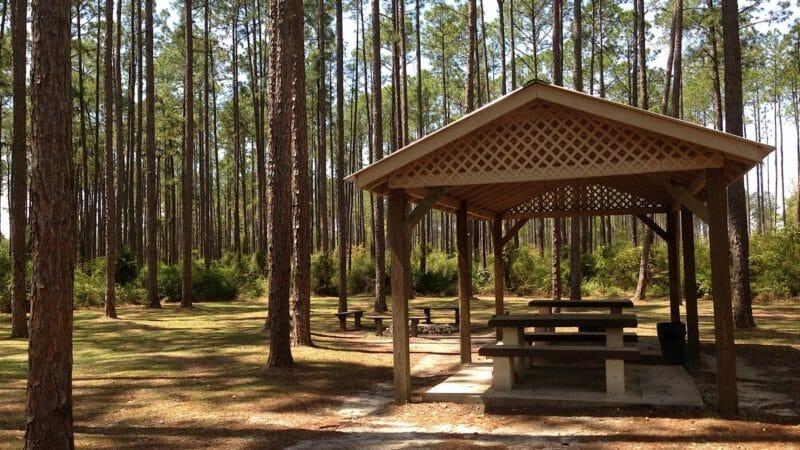 Group Camp Pine Log