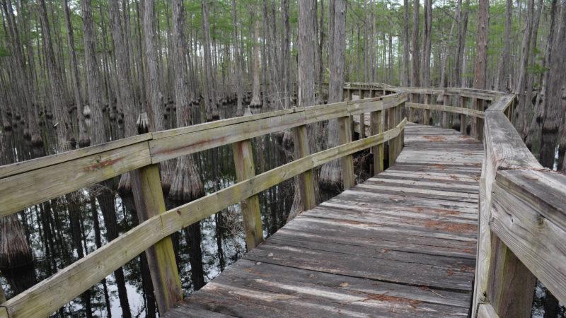 Campground Loop Pine Log