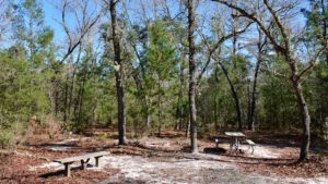 SW 49th Ave primitive campsite