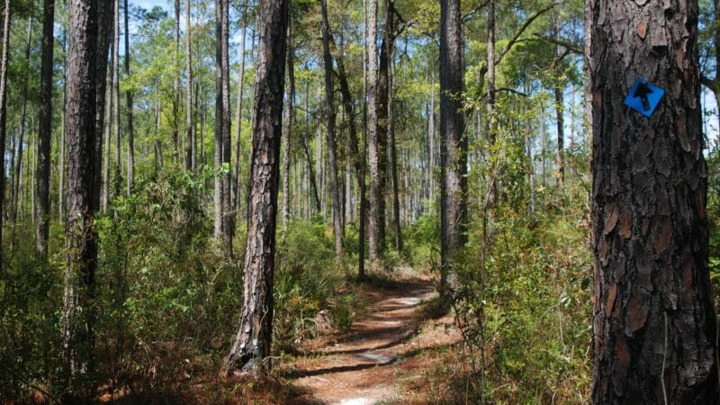 Tiemann Trail Pine Log