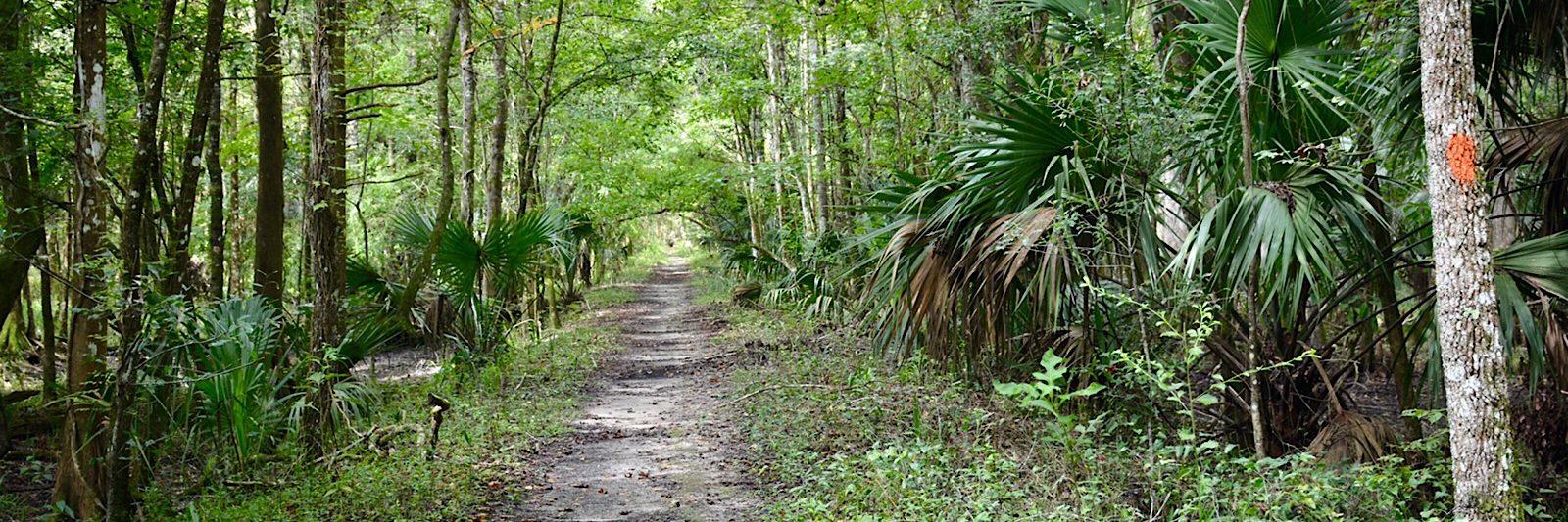 Florida Trail Marshall Swamp