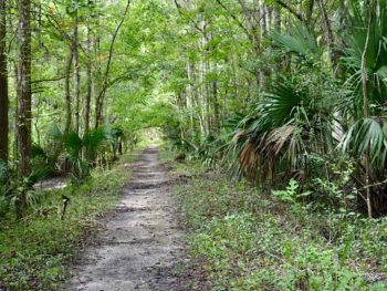 Florida Trail Marshall Swamp