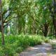 Oak hammock along the Chacala Trail