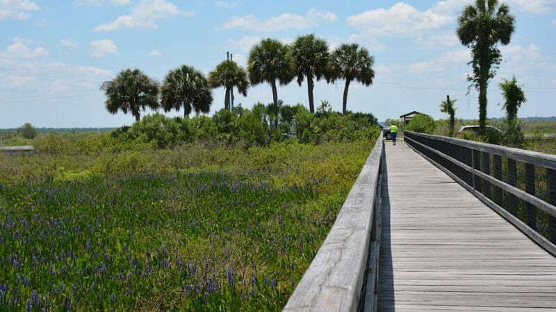Ecopassage Observation Boardwalk