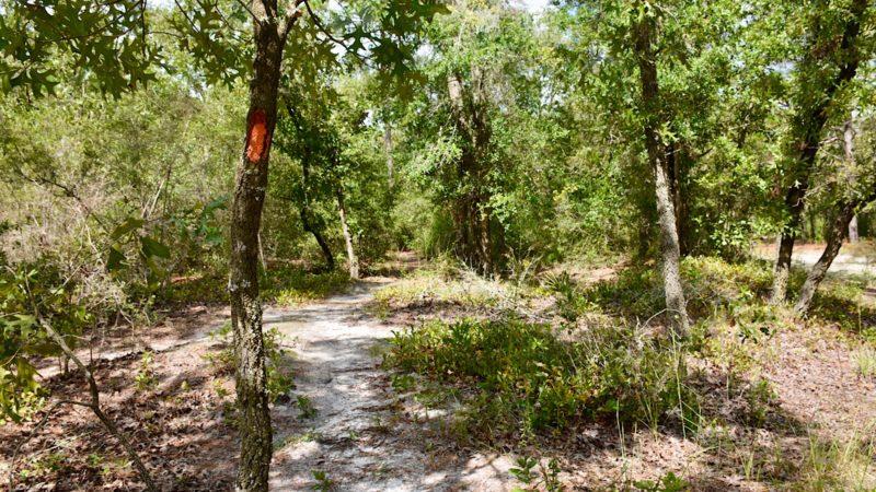 Sandhills Florida Trail Baseline
