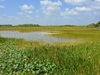 Loxahatchee NWR marshes