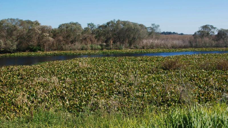 Paynes Prairie La Chua canal