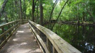 Prairie Creek Boardwalk