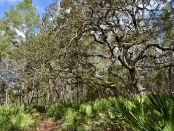 Oak hammock Tiger Bay