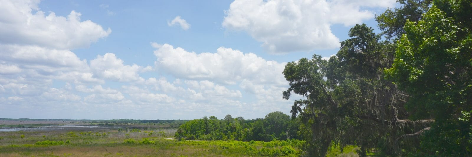 View east from Paynes Prairie tower