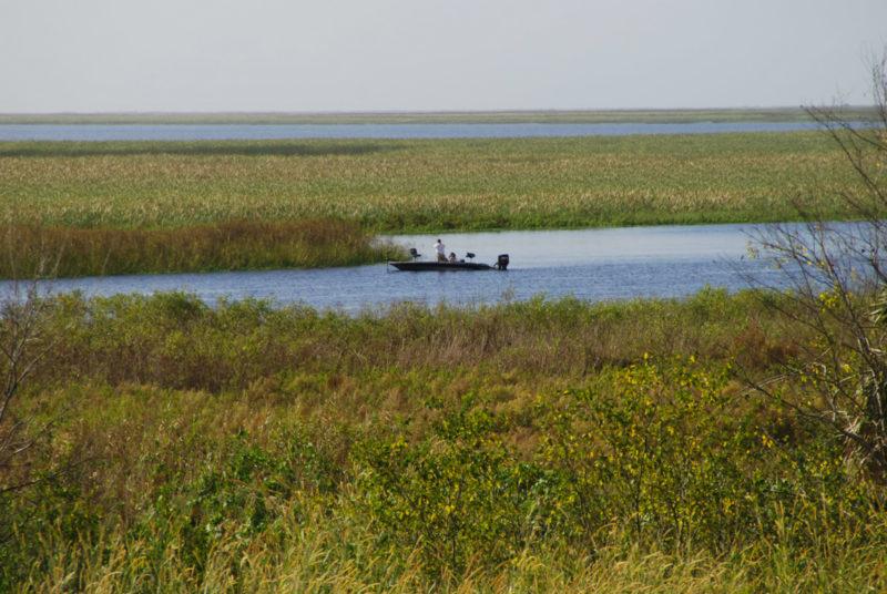 Lake Okeechobee marshes