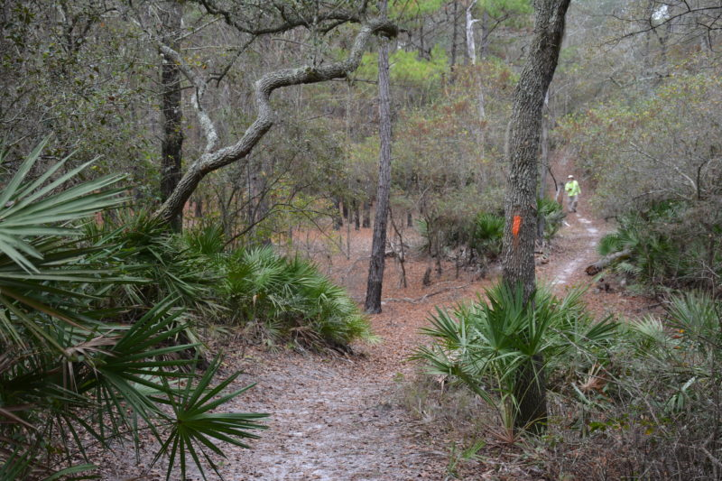 White Springs Tract trail