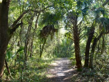 Hiking Blue Run of Dunnellon Park