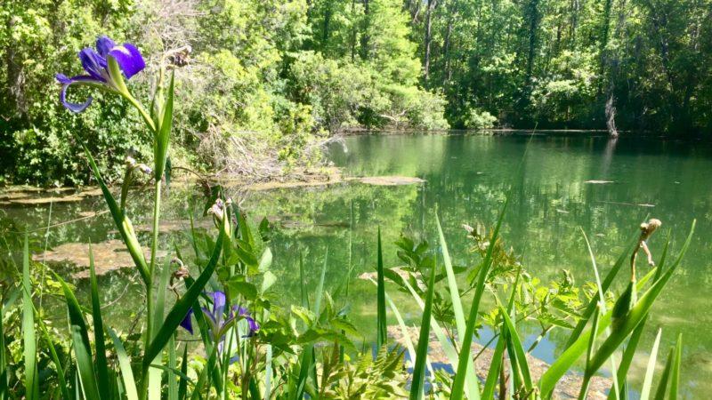 Blue Run Park iris