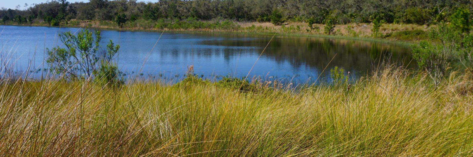 Buck Lake Ocala