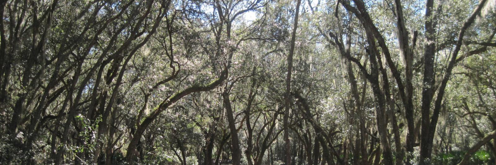 Oak hammock Pruitt