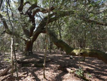 Florida Trail Pruitt Oaky Doky