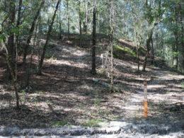 Florida Trail Pruitt switchback