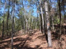Climb on the Florida Trail