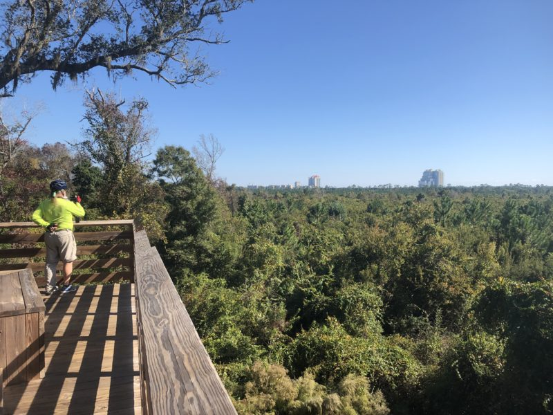 Gulf State Park overlook