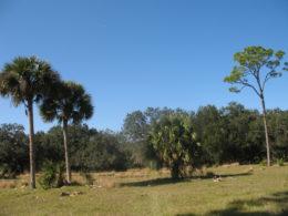 Florida Trail Yates Marsh