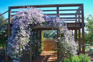Arnolds Butterfly Garden