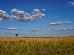 Kissimmee Prairie along the Florida Trail