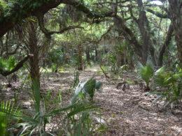 Florida Trail Chandler Slough East