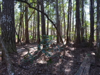 Florida Trail Ocala West