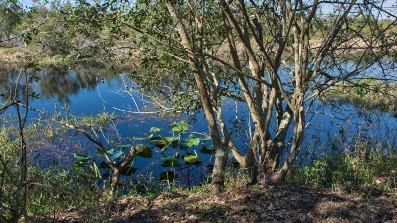 KICCO Kissimmee River slough