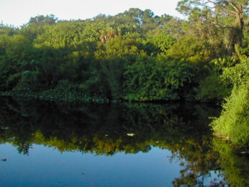 Hickey Creek