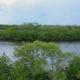 Jack Island Preserve