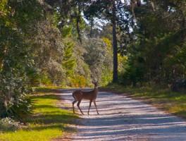 Safety during deer hunting season