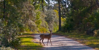 Safety during deer hunting season