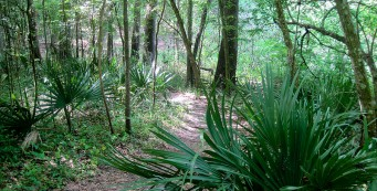 Creek Sink Trail at San Felasco Hammock