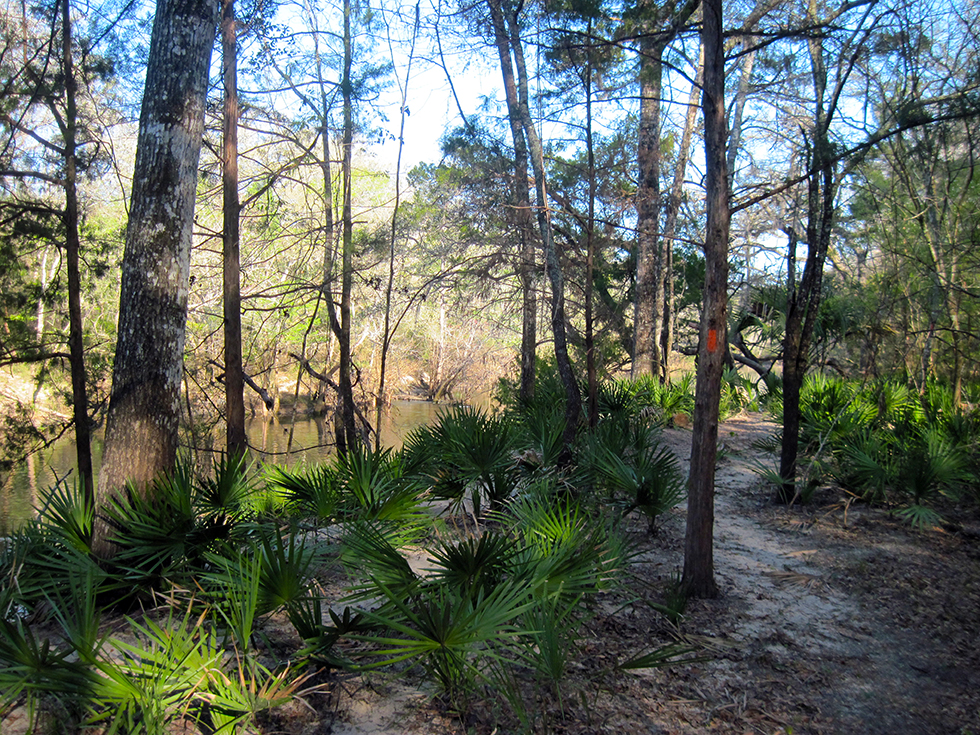 Walking along the bluffs of the Chipola RIver