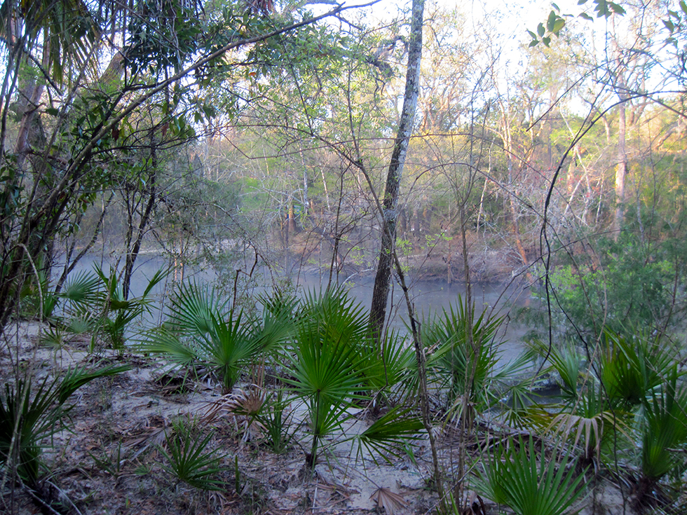 Morning mist on the Chipola River