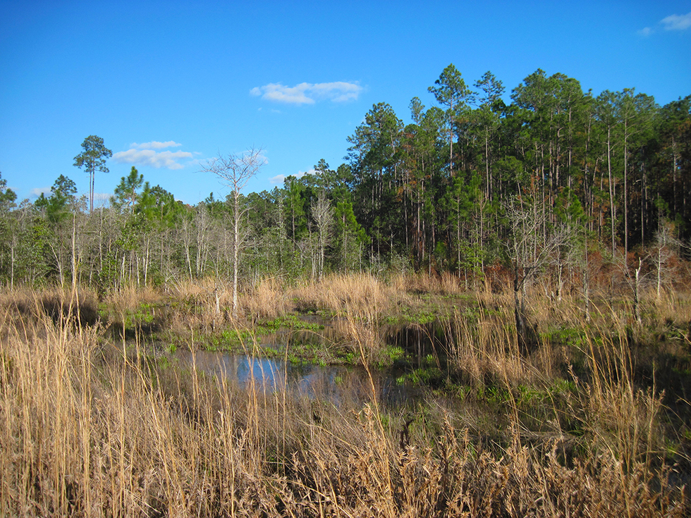 Bog at Bear Lake