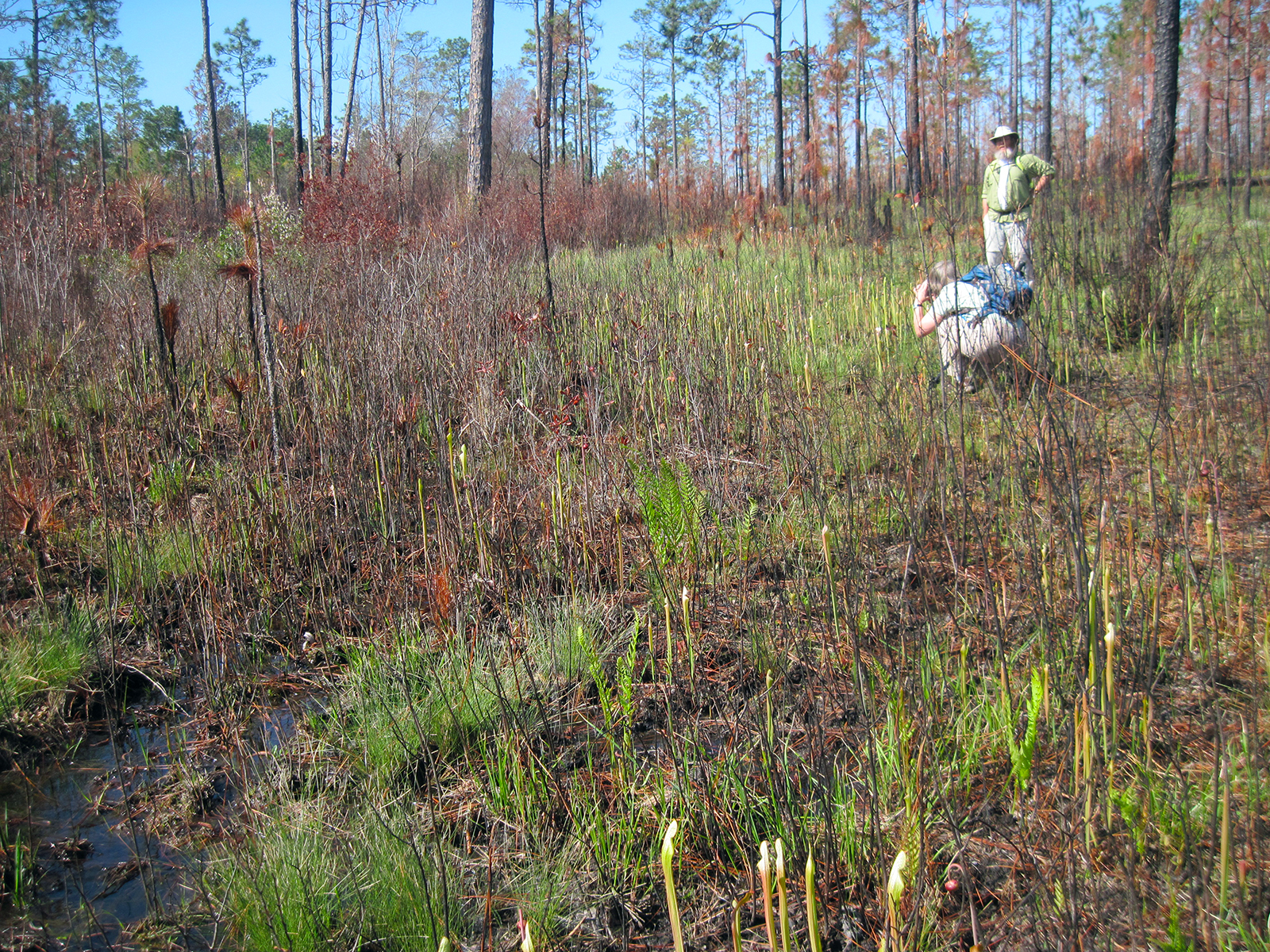 Taking pictures of pitcher plants at Hutton