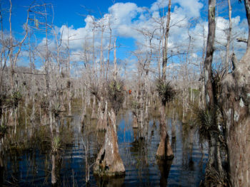 Hiking the Florida Trail in Big Cypress
