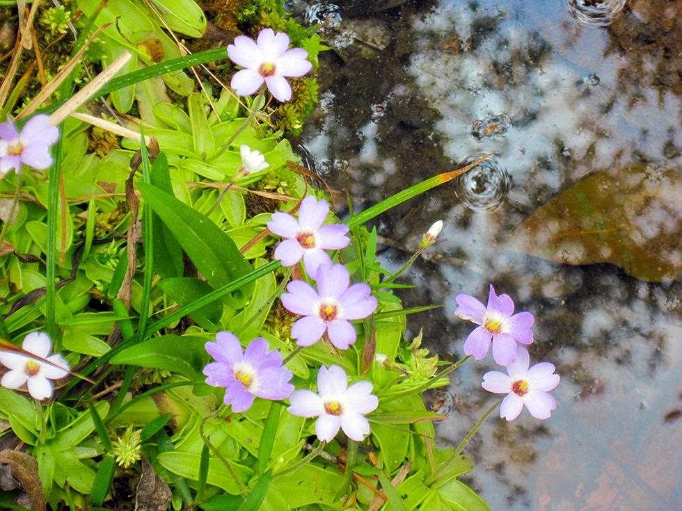 Wildflowers in the floodplain below the boardwalk
