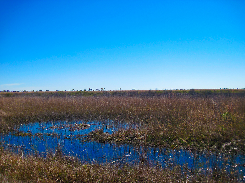 Most trailside water is home to big alligators