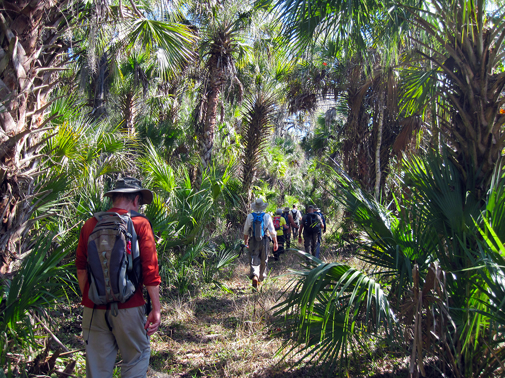 Palm hammock along the trail system