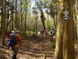 Hiking Tampa's Oak Ridge