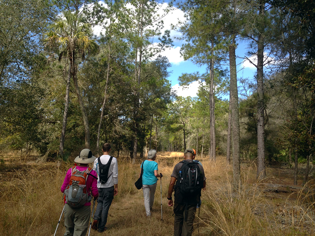 Walking through the dry sandhills