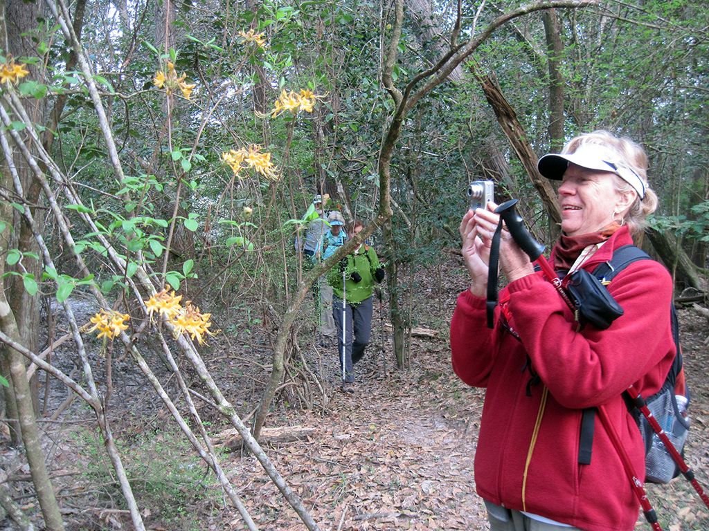 Gail takes a picture of a flame azalea