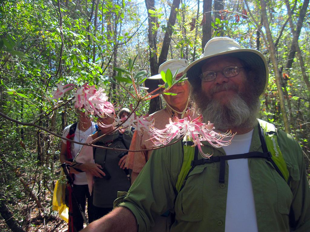 Walking through fragrant azalea blooms